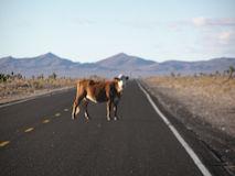 ETハイウェーに出没する謎の牛