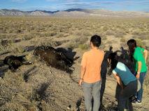 ETハイウェーから40m離れたところに横たわる2頭の牛の死体