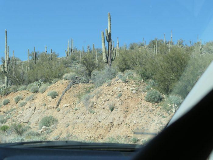 巨大なサボテンが林立する砂漠。(キャンプ地へ向かう道中、車内から撮影)