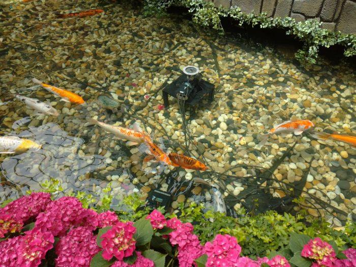日本庭園を再現しており池もある。